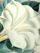 White Trumpet Flower 1932 By Georgia O'Keeffe