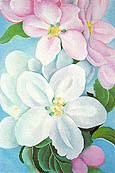 Apple Blossoms 1930 By Georgia O'Keeffe