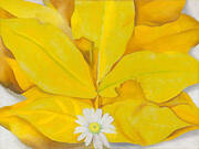 Yellow Hickory Leaves with Daisy 1928 By Georgia O'Keeffe