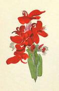 Red Canna 1920 By Georgia O'Keeffe