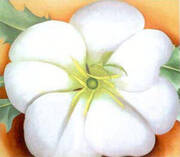 White Flower with Red Earth By Georgia O'Keeffe