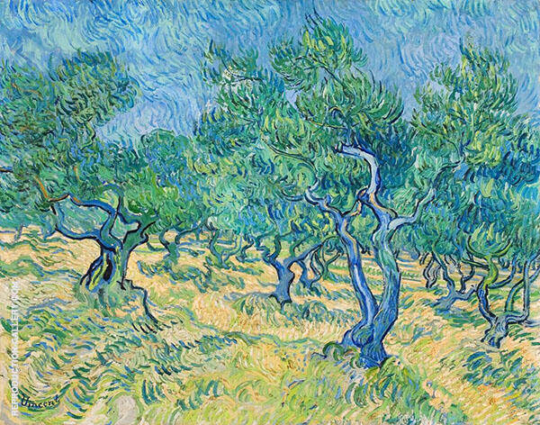 Olive Grove 1889 By Vincent van Gogh