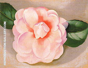 Pink Camellia 1935 By Georgia O'Keeffe - Oil Paintings & Art Reproductions - Reproduction Gallery