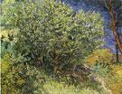 Lilac Bush 1890 By Vincent van Gogh