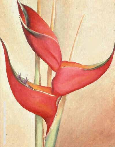 Not from my Garden By Georgia O'Keeffe - Oil Paintings & Art Reproductions - Reproduction Gallery