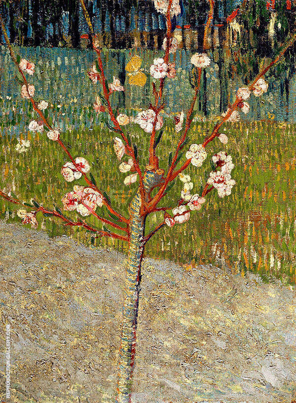 Almond Tree in Blossom 1888 By Vincent van Gogh