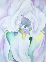 White Iris 1930 By Georgia O'Keeffe