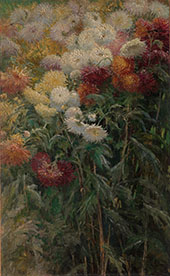 Clump of Chrysanthemums Garden at Petit Gennevilliers 1893 By Gustave Caillebotte