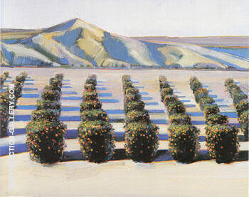 Orange Grove By Wayne Thiebaud