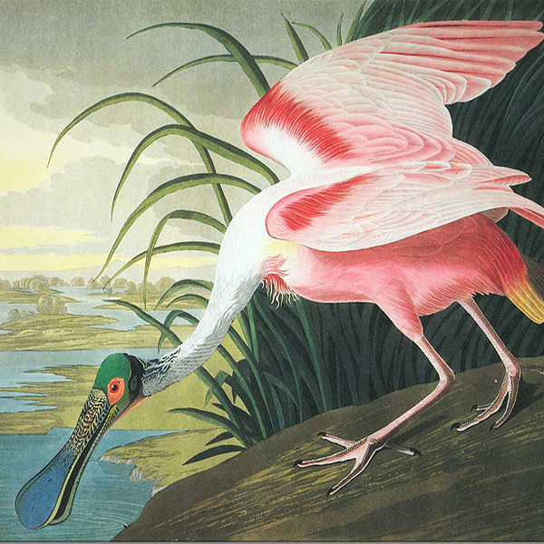 Oil Painting Reproductions of John James Audubon