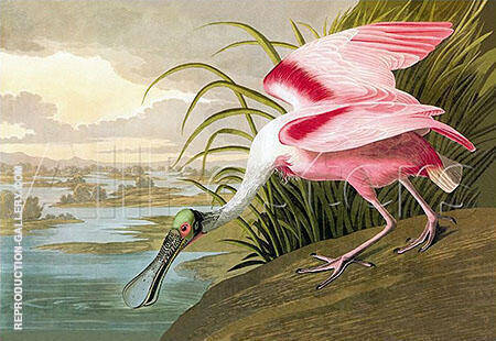 Roseate Spoonbill 1935 By John James Audubon Replica Paintings on Canvas - Reproduction Gallery