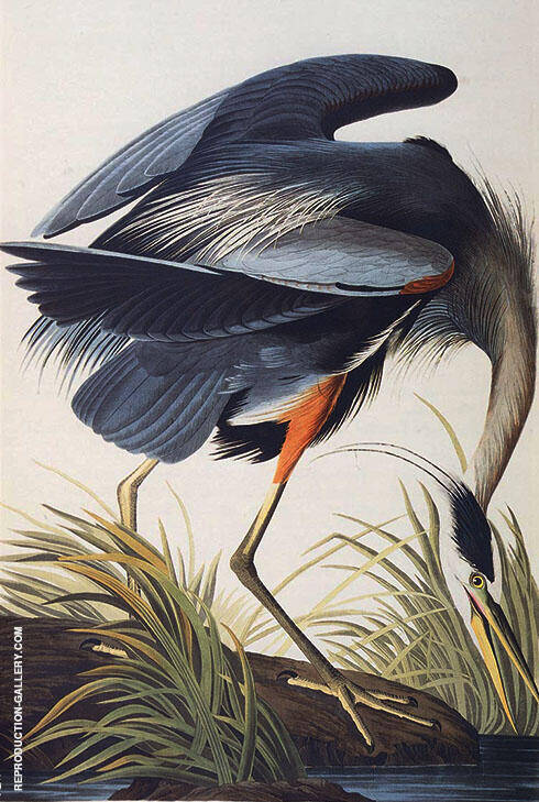 Great Blue Heron 1821 By John James Audubon Replica Paintings on Canvas - Reproduction Gallery