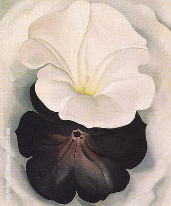 Black Petunia and White Morning Glory 1926 2 By Georgia O'Keeffe - Oil Paintings & Art Reproductions - Reproduction Gallery