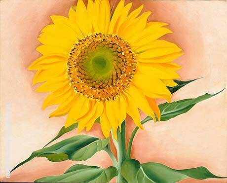 A Sunflower From Maggie 1937 By Georgia O'Keeffe - Oil Paintings & Art Reproductions - Reproduction Gallery