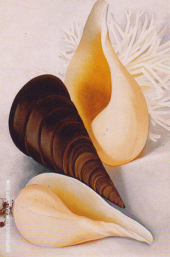 Two White Shells One Black Shell 1937 By Georgia O'Keeffe