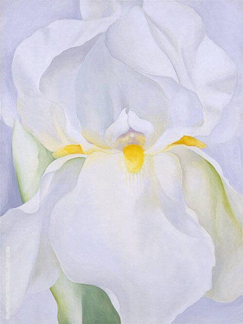 White Iris No 7 1957 By Georgia O'Keeffe