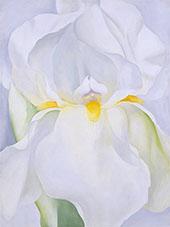 White Iris No 7 1957 By Georgia O'Keeffe