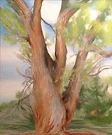 Cottonwood Tree New Mexico 1943 By Georgia O'Keeffe