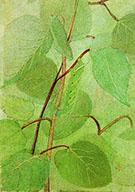 Sphinx Caterpillar By Abbott H Thayer