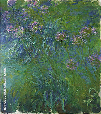 A Bed of Agapanthus 1917_822 By Claude Monet