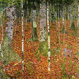 Birch Wood 1903 By Gustav Klimt