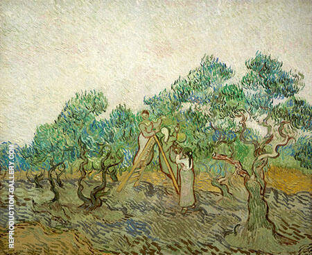 Women Picking Olives 1889 By Vincent van Gogh