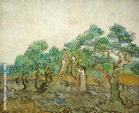 Women Picking Olives 1889 By Vincent van Gogh