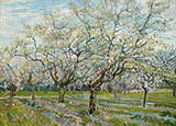 Orchard with Blossoming Plum Tree 1888 By Vincent van Gogh
