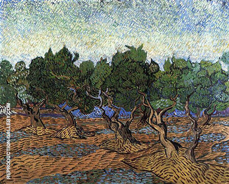 Olive Grove c 1889 By Vincent van Gogh