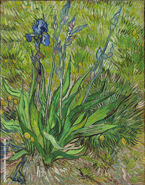 The Iris St Remy By Vincent van Gogh