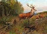 Red Deer on The Lookout By Albert Ernst Muhlig