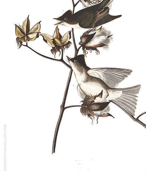 Pewit Flycatcher By John James Audubon