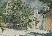 Orange Tree By Winslow Homer