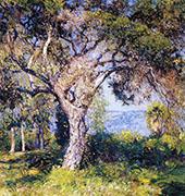 The Oak 1916 By Guy Rose