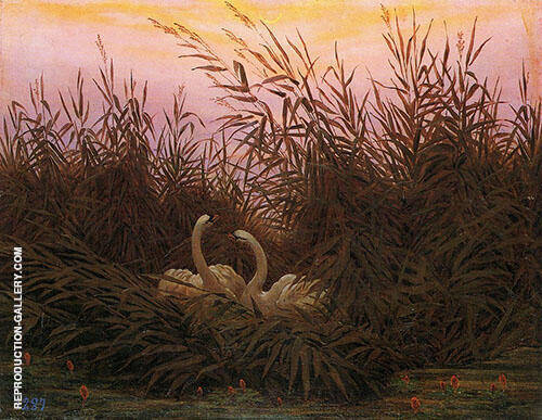 Swans Aamong The Reeds at The First Morgenro Painting By ...