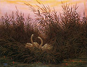 Swans Aamong The Reeds at The First Morgenro By Caspar David Friedrich