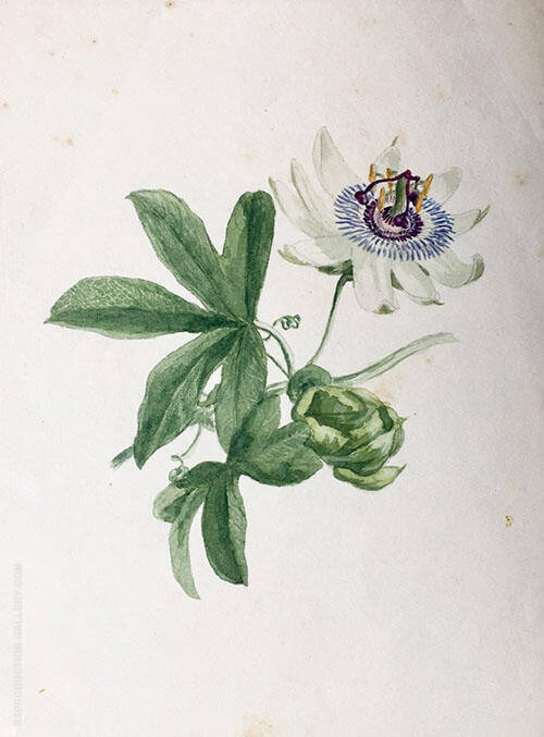 Passion Flower 1890 Painting By Emma Minnie Boyd - Reproduction Gallery