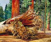 A Fallen Giant Calaveras Grove California 1875 By Marianne North