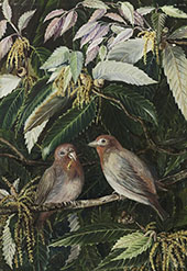 A Himalayan Oak and Birds Nainee Tal India By Marianne North