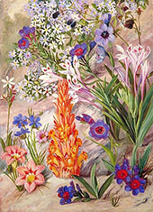 A Medley from Groot Post South Afric By Marianne North