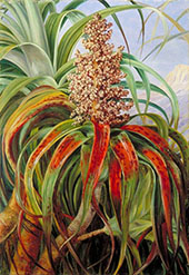 A New Zealand Dracophyllum 1880 By Marianne North