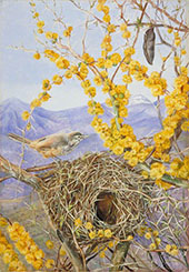 Armed Bird's Nest in Acacia Bush Chili 1880 By Marianne North