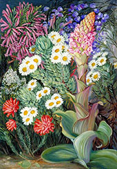 A Selection of Flowers from Table Mountain Cape of Good Hope By Marianne North