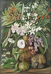 A Selection of Flowers Wild and Cultivated with Puzzle Nut Mahe By Marianne North