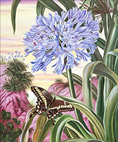 Blue Lily and Large Butterfly By Marianne North