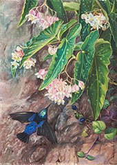 Brazilian Flowers 1880 By Marianne North