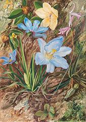 Brazilian Wild Flowers 1880 By Marianne North