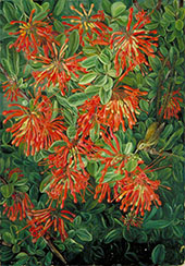Burning Bush and Emu Wean of Chili 1880 By Marianne North