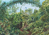 Butterflies Road Through Gongo Forest Brazil 1880 By Marianne North