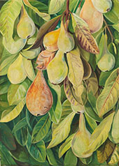 Cabazina Pears Brazil 1880 By Marianne North